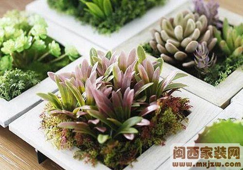 室内植物有哪些?哪些植物不宜放室内?