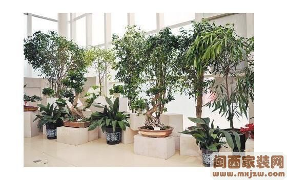 装修购买植物及摆放技巧?装修购买植物的种类有哪些