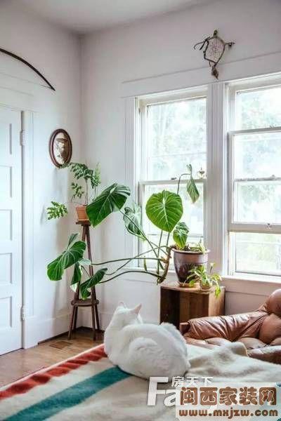 植物 软装